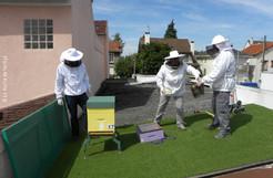 Installer des ruches