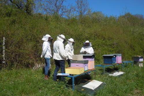 Apprendre autour de la ruche