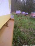 Le pollen rentre