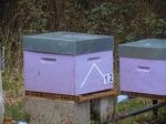 Choix de la ruche