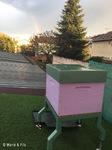 Un arc-en-ciel accueille les abeilles