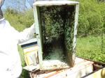 Il reste des abeilles dans la ruchette