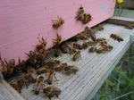 Entrée de ruchette