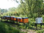 Les ruches côte-à-côte