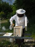 Visite d'une ruchette