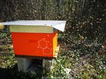 Activité après changement de ruche