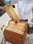Cadres de miel